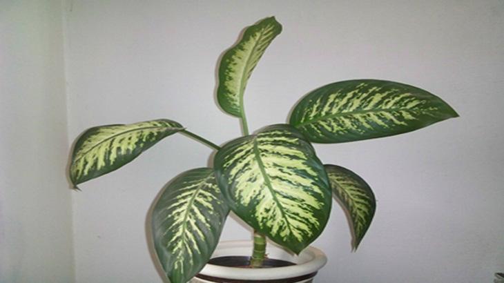 plantas t xicas comunes en jardines de infantes