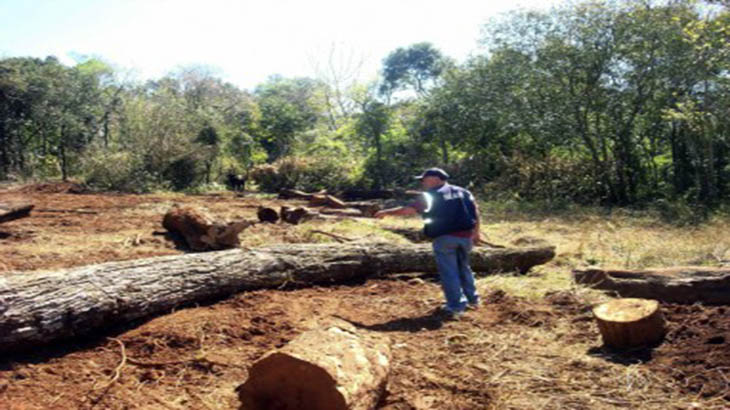 Resultado de imagen para deforestacion en el chaco