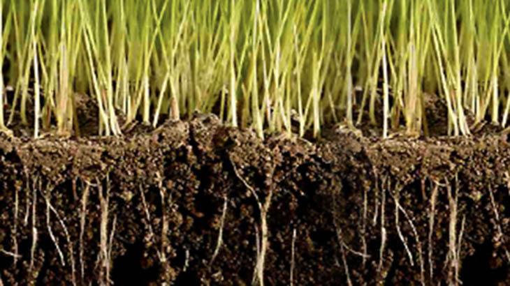 La microbiolog a de suelos favorece el cuidado del for 5 cuidados del suelo