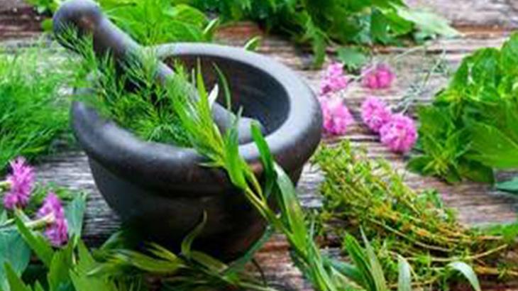 Investigan en la UNR las propiedades de las plantas medicinales